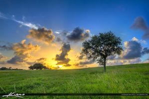 Grassy-Hill-Lone-Tree-at-Sunset-Dyer-Park by CaptainKimo