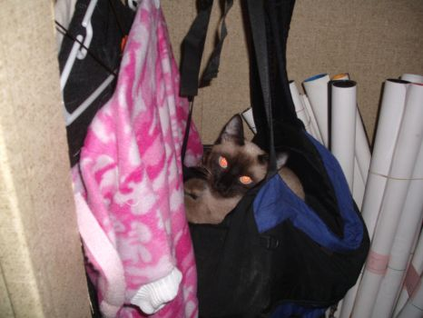 cat in a bag lol by Equifever