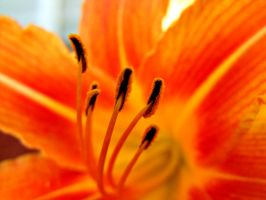 Tiger Lily by AwakeYourSoul