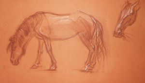 Horse 1 by 3Dasha