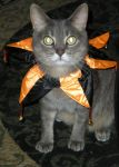 Costume Cat by Shadowind