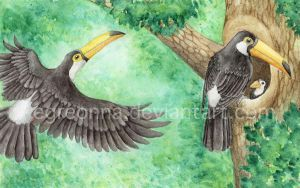 Toco Toucans by Egreonna