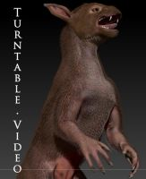 Raczoon's Critter - Fur WIP Turntable by LeccathuFurvicael