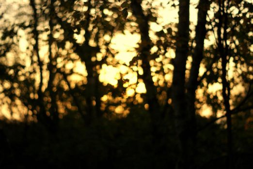 tree bokeh by fastidious-cat