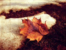 Forsaken Maple Leaf by april182