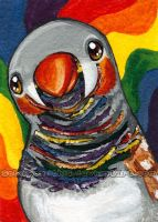 Rainbow Zebra Finch by sobeyondthis
