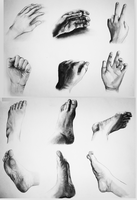 Hand and Foot Studies by lycanthropeful