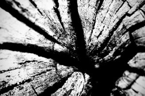 Dry wood by AlexTomaselli