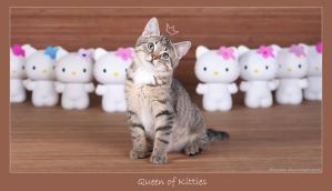 Queen of kitties by hoschie