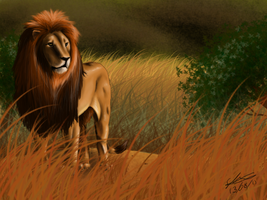 Lion by emmy1320