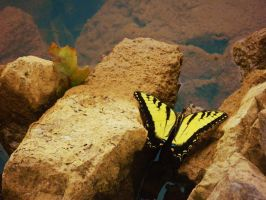 Butterfly on the Lake by leighbennett