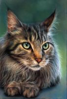 Maine Coon by Keraani