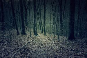 Forest II by AssassinM-Stock