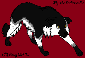 Fly my border collie OC by x-Vodkaa