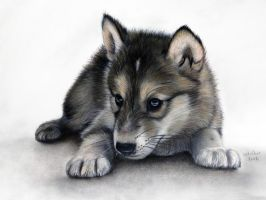 Wolf Pup by ADRIANSportraits