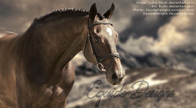 Mountain Horse Picture by EquideDesigns