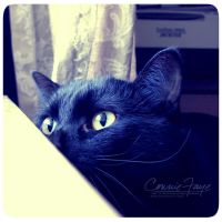 Jules - Stalking Birds by ConnieFaye
