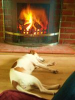 daisy in front of the fire by loobyloukitty