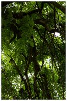 Green Curtain - Part 2 by janey-in-a-bottle