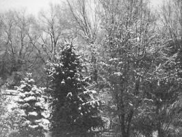 Snowy trees by Elizabeth1315