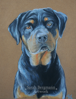 Bruce - Pastel portrait by BLACKNIGHTINGALE81