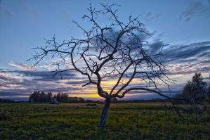 Tree in the Setting Sun by xDx