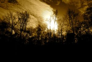 The Weary Trees by candentesomnium