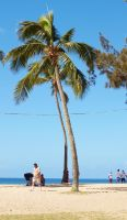 Palm Trees on the Beach II by Squiddgee7734