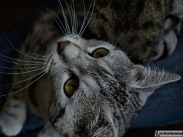 Cat looks up by waclawq