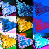 Cat of a different color by IcejCat