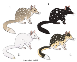 Eastern Quoll Point Adoptables by twapa