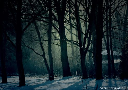 : Forest : by drop-of-imagination