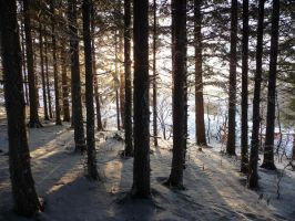 winterforest IV by mimose-stock