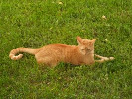 Cat Stock 34 by Orangen-Stock