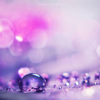 Lavender drop.. by Fwirll