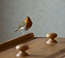 Day Sixty Nine: Robin in the House by Kaz-D