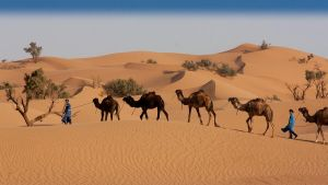 Desert scape 4 by Rob1962