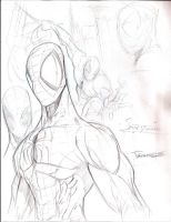 spidey sketches2 by JoeyVazquez