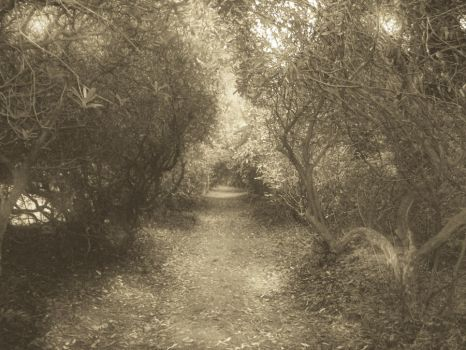 Walk Through The Woods by jools-cyrus