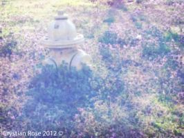Rays on the fire hydrant by cryas