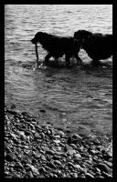 Dogs In The Puget Sound by Danielagor