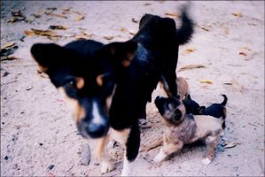Karen Village dogs. by vildkatt