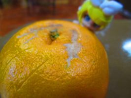 Sneaking up on the orange by kimtan1999