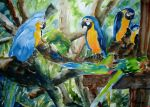Macaw Convention by p-e-a-k