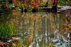 Another Swamp Reflection by Tailgun2009