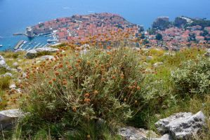 Dubrovnik - Old City by Nile-Paparazzi