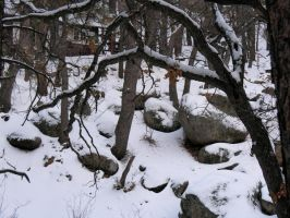 Snow in Hualupai Mountains by Utentsu