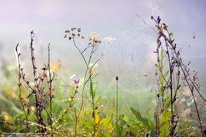 Web by patrykcyk