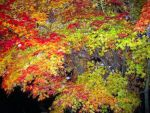 Iridescent Leaves by Livala
