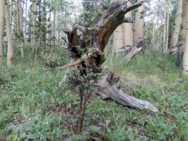 One awesome Stump by ReflectiveCreations